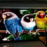 China Ultra Thin Led Video Wall Display Full Color Video Billboards P1.667 P1.25 Indoor Rgb wholesale