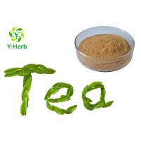 China Green Tea Leaf Extract Herbal Extract Powder 98% Polyphenol 70% EGCG Catechin Camellia Sinensis Powder wholesale