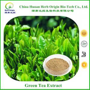 China Green Tea Extract Polyphenols 98% on sale