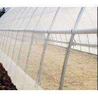 China Malla Insect Protection Netting Mosquito Nets Windbreaks ISO 9001 Standard on sale