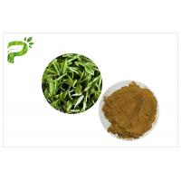 China Green Tea Polyphenols Plant Extract Powder 95% For Dietary Supplement Weight Loss on sale