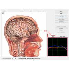 China Bio-resonance Diagnostics 8d NLS / 9D NLS Body Health Analysis System Machine wholesale