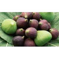 Ficus Carica Extrac, 10:1, Helps in losing Weight, decrease blood pressure,  Degenerative infections, Chinese manufature