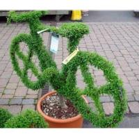 China Creative Artificial Garden Topiary Plastic Boxwood Topiary Bike in Pot for Showroom Decor wholesale