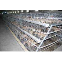 China Philippines Poultry Chicken Farm A Type Battery Small Layer Cage with Automatic Feeding Machine in Chicken Shed wholesale