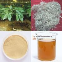 China Panax Ginseng Root Extract wholesale