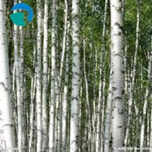 China Preventing Hyperlipidosis Plant Extract Powder White Birch Bark Extract Betulinic Acid on sale