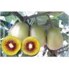 China Árvores de fruto: fruto de quivi, sinensis do Actinidia, yangtao, groselha chinesa, Actinidia chinensis wholesale