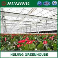 China Professional Plastic Film/Polycarbonate sheet Greenhouses for Commercial Agriculture Green House with Cooling System on sale