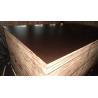 China EUCAPLY  filmfaced plywood  FSC wholesale