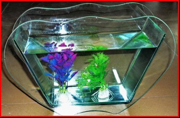 Acrylic Glass Aquarium Images