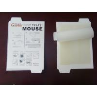 China mouse glue traps,Trap Catcher, spider & insect trap,mouse,roach & ants wholesale