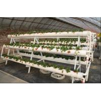 China Transparent Greenhouse Strawberry Production , Anti Fog Plastic Film Greenhouse wholesale
