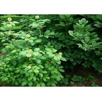 Eleutheroside E Natural Health Supplements CAS No.39432-56-9 1-98% Natural Plant for sale