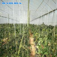 China Steel Structure Polythene Tunnel Plastic Tomato Greenhouse on sale