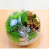 China Micro landscape large medium and small slanted glass bottle mossy fleshy micro DIY ecological bottle wholesale