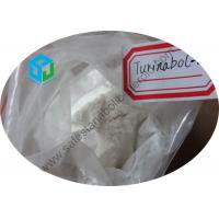 China El esteroide crudo de la testosterona pulveriza Turinabol oral 4 Chlorodehydromethyltestosterone wholesale