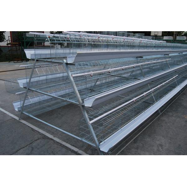 designer sunglass frames  cages designer