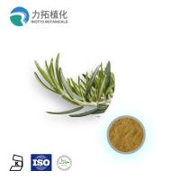 China 1. GMP Manufacture Rosemary Extract Rosmarinus officinalis wholesale