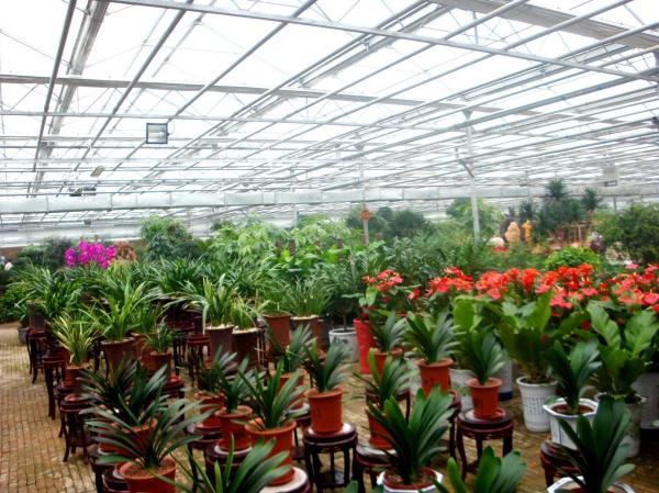 Quality Exhibition Commercial Outdoor Greenhouse , Flower Growing Large Green Houses for sale