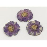 Beauty Small Dried Flowers Diameter 1.5CM Color Optional For Necklace Ornament
