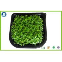 China Plastic Seed Tray Blister Packaging Tray With Black For Plants Grown wholesale