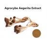China Organic Agrocybe Mushroom Extract Powder Anti - Aging, Medicinal Mushroom Extract Powder Cancer Treatment wholesale