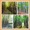 China Natural Octacosanol Sugar Cane Extract wholesale