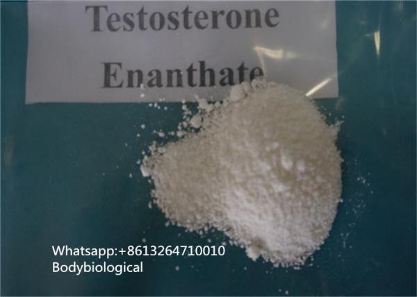 Quality Hormona de sexo masculina de CAS 315-37-7 de los esteroides del polvo de Enanthate de la testosterona de la pureza del 99% for sale
