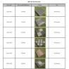 Buy cheap DIY Flooring summary from wholesalers