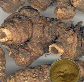 China 100% Natural Notopterygium Incisum Chinese Herbal Medicine wholesale