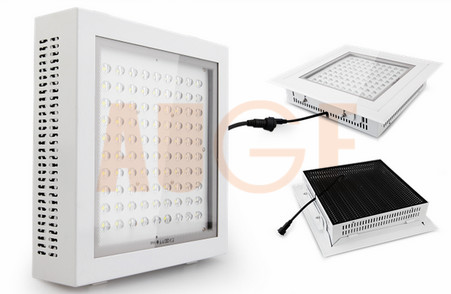100W gas station LED canopy light IP65 Mean