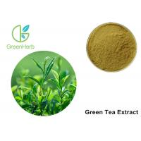 China Green Tea Leaf Extract Treating Measles , 30% Polyphenols Powder wholesale