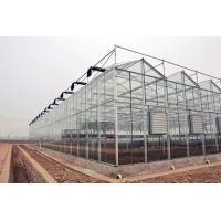 China Double Layer Commercial Glass Greenhouse Side Wall Height 2.5-6m With Heating System wholesale