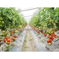 China Agriculture Greenhouse for tomato wholesale