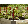 China Decorative Eggplant Metal Garden Trellis , Trellis Plant Support  For  Eggplant wholesale