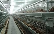 China Chicken Cage wholesale