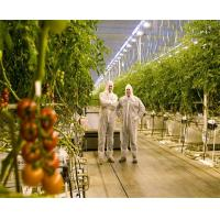 China Strong Structure Large Glass Greenhouse , Venlo Glass Greenhouse Single Layer wholesale