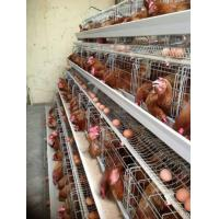 China South africa best price automatic layer chicken cage for sale(Whatsapp +86 13331359638) wholesale