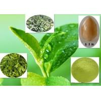 China Healthy Green Tea Polyphenols , 84650-60-2 Green Tea Extract For Weight Loss wholesale