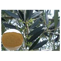 China Hydroxytyrosol Olive Leaf Extract For High Blood Pressure CAS 10597 60 1 wholesale