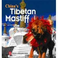 China China's Tibetan Mastiff wholesale