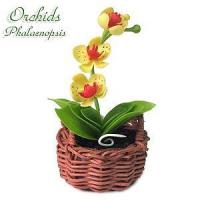 Buy cheap Orchid from wholesalers