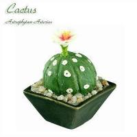 Buy cheap Cactus from wholesalers