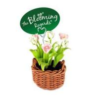 China Blooming Regards -Tulip collection wholesale