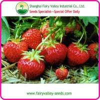 China High Yield Akihime/Toyonoka/TuD La /phoenix coronet/Beauty/red solid beauty Strawberry Seeds wholesale
