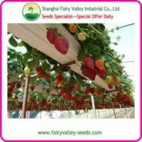 China Bonsai Strawberry Seeds For Landscape wholesale