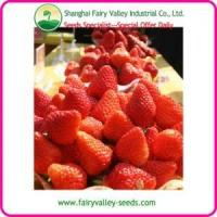 China High Quality Sweet Charlie Strawberry Seeds For Cultivation wholesale