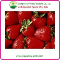 China 2013 New Big Red White Black Strawberry Seeds hot sale!! wholesale