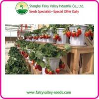 China Pot Flower Sweet Red Strawberry Seeds-Very Beautyful Landscape wholesale